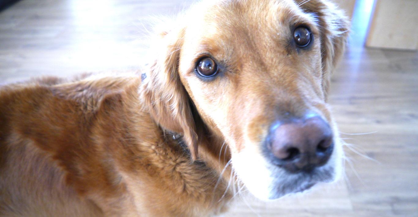 LulworthHouseB&B_lily dog