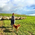 Carole & Sheep