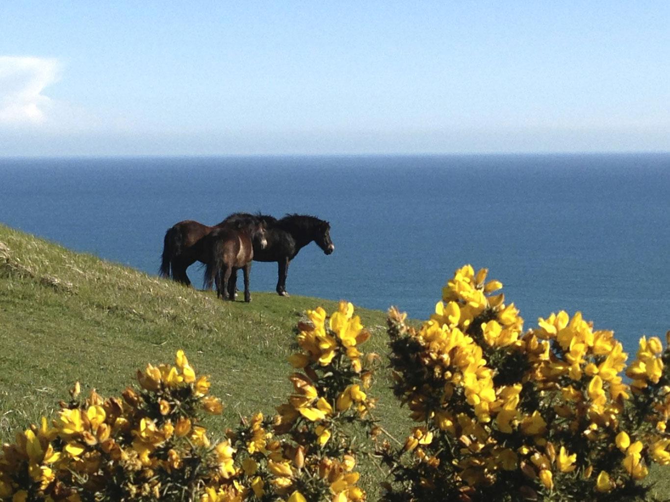 Bindon Hill horses