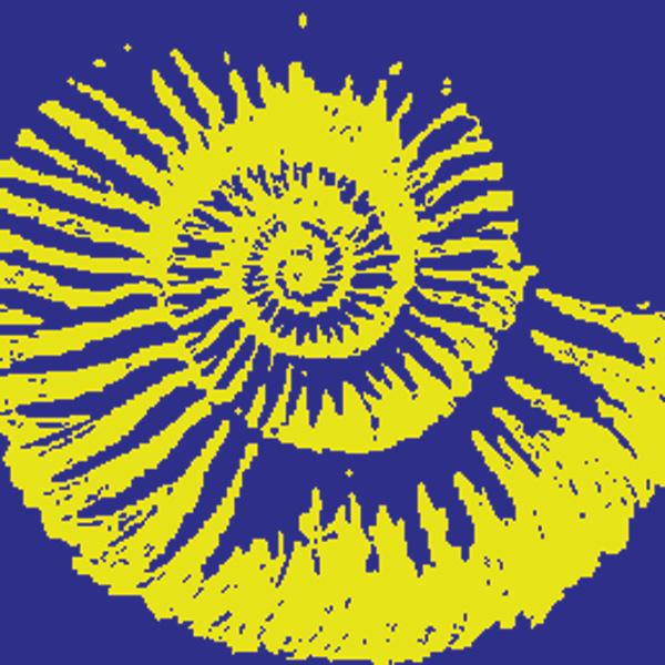 Ammonite colour logo